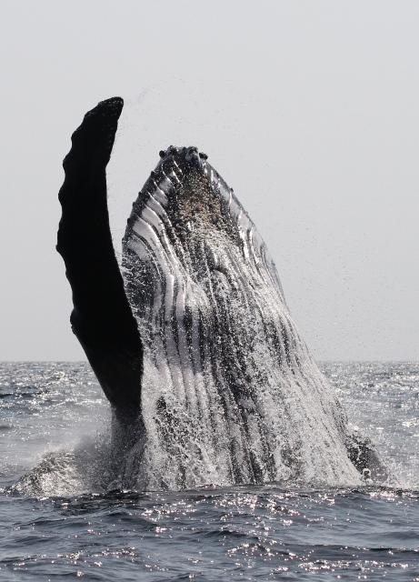 whaletime_ken-finlay-9